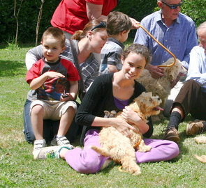 Labradoodle puppies enjoy visitors at Rutland Manor in Australia